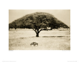 The Sheltering Tree, Serengeti Giclee Print by Lorne Resnick