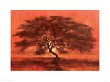 Desert Tree Giclee Print by Jonathan Sanders