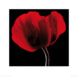 Rich Red Poppy Giclee Print by Ian Winstanley