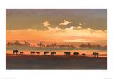 Wading Elephants Lámina giclée por Jonathan Sanders
