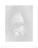 Pearl Silver Mouth Shell - front Giclee Print by Ben Wood
