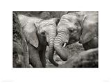 Elephants in Love Giclee Print by Marina Cano