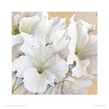 Perfection In White Giclee Print by Maggie Thompson