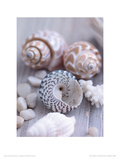 Shells and Pebbles Giclee Print by Lauren Floodgate