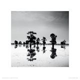 Cypress Swamp V Giclee Print by Josef Hoflehner