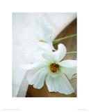 White Still Life II Giclee Print by Ian Winstanley