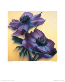 Purple Anemones Giclee Print by Rachel Deacon