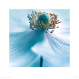 Japanese Anemone Giclee Print by Ian Winstanley