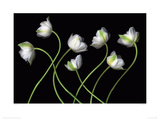 Seven Spring Greens Giclee Print by Harold Feinstein