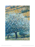 Olive Tree And Fields, Rhodes Giclee Print by Robert Jones