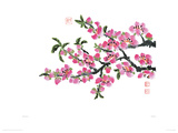 Pink Flowers Giclee Print by Simon Zen