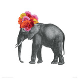 Elephant Giclee Print by John Murphy