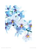 L'angelo azzurro Stampa giclée di Warwick Orme