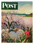 """Apple Blossom Time"" Saturday Evening Post Cover, May 6, 1950 Giclee Print by John Clymer"
