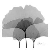 Ginkgo Leaves Black and White Prints by Albert Koetsier