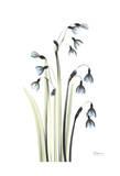 Snowdrop Galanthus in Springtime Poster by Albert Koetsier