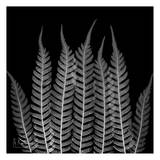Tree Fern Galore on Black Posters by Albert Koetsier