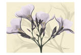 Oleander in Purple on Beige Art by Albert Koetsier