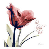 Single Tulip Live Laugh Print by Albert Koetsier