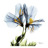 Blue Azalea in Bloom Prints by Albert Koetsier