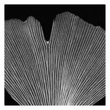 Single Leaf Black on White Prints by Albert Koetsier
