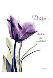 Purple Tulip, Dream Prints by Albert Koetsier