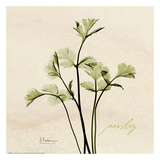 Parsley on Beige Poster by Albert Koetsier