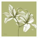 Twin Lilies on Pale Green Prints by Albert Koetsier