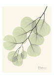 Eucalyptus Leaves in Green Prints by Albert Koetsier