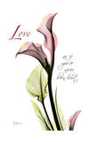 Calla Lily in Pink, Love Posters by Albert Koetsier