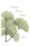 Ginkgo in Green, Mind Body Affiches par Albert Koetsier