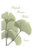 Ginkgo in Green, Mind Body Reprodukcje autor Albert Koetsier
