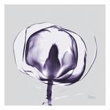 Purple Tulip Bud Open on Purple Prints by Albert Koetsier
