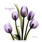 Tulip in Purple, Imagine Poster von Albert Koetsier