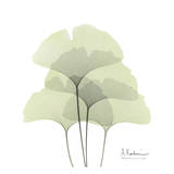 Ginkgo Quad in Green Art by Albert Koetsier