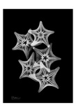 Star Fish Group on Black Poster by Albert Koetsier