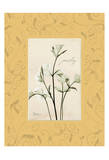 Parsley With Yellow Damask Frame Prints by Albert Koetsier