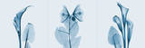 Lilies Triple in Blue Posters by Albert Koetsier