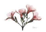 Oleander Peace in Pink Posters by Albert Koetsier