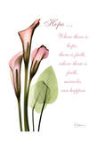 Calla Lily in Pink, Hope Art by Albert Koetsier