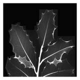 Holly Leaves Black and White Art by Albert Koetsier