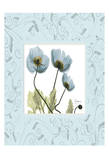 Poppies With Blue Damask Frame Poster by Albert Koetsier
