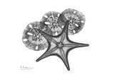 Starfish And Sand Dollar Prints by Albert Koetsier