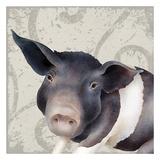 Pig Posing Prints by Carol Kemery