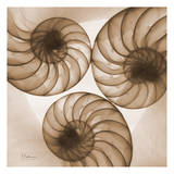 Brown Shell Triple Prints by Albert Koetsier