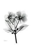 Impatience in Black and White Posters by Albert Koetsier