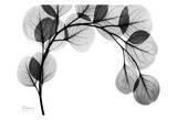 Arch of Eucalyptus in Black and White Affiches par Albert Koetsier