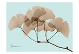 Ginkgo Leaves Brown on Blue Print by Albert Koetsier