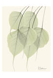 Bo Tree Leaves in Green Poster by Albert Koetsier
