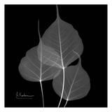 Bo Tree on Black Affiches par Albert Koetsier